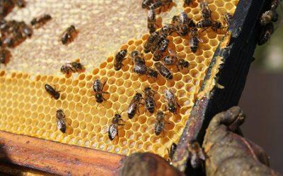 aapidée fête les abeilles !